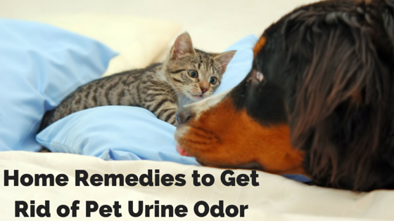 Home Remedies to Get Rid of Pet Urine Odor